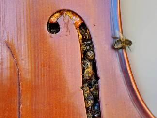cello hive 2